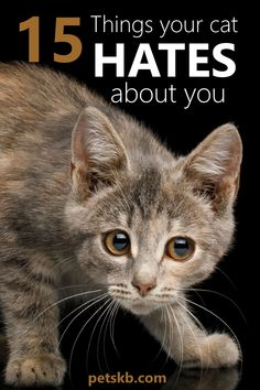 11 Ways to Earn Your Cat's Trust . and build its confidence. Here are 11 simple tips to gain your cat's trust and help it to feel at ease in your company. Banish the nervous behavior starting today Cute Cats, Funny Cats, Pet Dogs, Dog Cat, Cat Attack, Cat Info, Cat Care Tips, Pet Care, Kitten Care