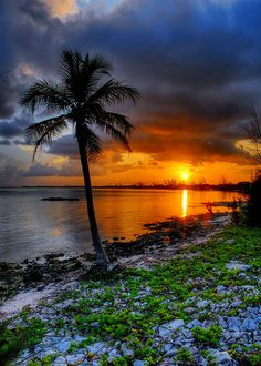 Cayman palm sunset Can't wait to be cruising to the Cayman w/ my husband in 2 weeks from today!! :)