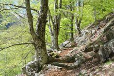 Valle di Lodano-Copyright Foto Christian Ferrari, solo uso turistico , no commerciale Parks, Flora Und Fauna, Ferrari, Peregrine, Small Ponds, Rare Plants, Hiking Trails, River, Parkas