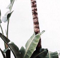 green / @bellafosterblog
