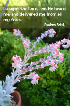 I sought the Lord, and He heard me, And delivered me from all my fears. [Psalm 34:4]