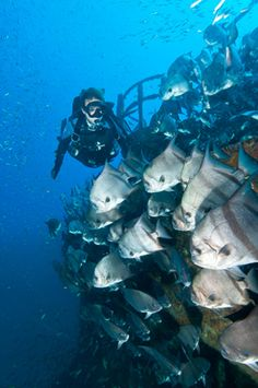 For centuries, the waters off the Outer Banks of North Carolina have claimed hundreds of vessels. Here are the best shipwrecks for divers in the Tarheel State.
