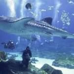 Trump seems to think that sharks are ocean terrorists http://ift.tt/2rjd0aM