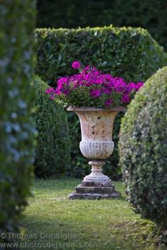 Gorgeous Garden Urn With Purple Flowers