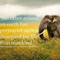 'No other animals on earth has portrayed such a disregard for life than mankind' - Elephant Save Our Earth, Vegan Quotes, A Course In Miracles, Stop Animal Cruelty, Mundo Animal, Animal Quotes, Animal Cruelty Quotes, Animal Rights, In This World