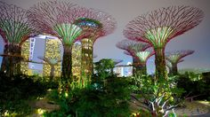 Gardens by the Bay Pictures: View Photos & Images of Gardens by the Bay