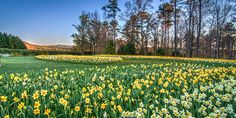 Flower Power: The South's Spectacular Floral Views