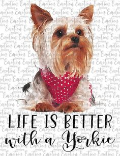 Yorkie Puppy, Cute Pillows, Good Things, Things To Sell, Card Sketches, Yorkshire Terrier, Sign Design, Animals And Pets, Life Is Good