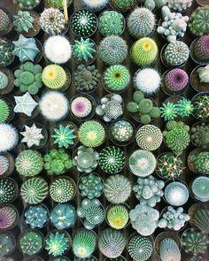 plantes d'intérieur cactus main verte mosaïque de cactus plantes grasses petites plantes Cactus Flower, Succulents, Succulent Plants