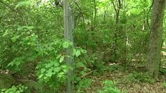 A new study at the University of Tennessee Anthropology Research Facility, also known as the Body Farm, could have far reaching effects on court cases worldwide.