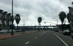 Palm trees, Oakland CA