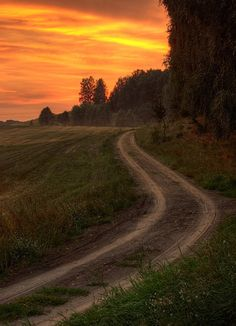 Showcase of Road and Path Photography: 50 Exquisite Shots