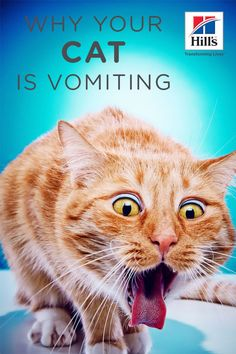 There are many common sick cat symptoms that you must keep an eye on. Symptoms can indicate serious health issues, should be treated once they appear. Healthy Cat Food, Best Cat Food, Old Cats, Cats And Kittens, Kitty Cats, Cat Throwing Up, Cat Diseases, Cat Nutrition, Cat Stands