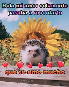 Funny Spanish Memes, Spanish Humor, Funny Memes, Miss U My Love, I Love You Baby, Romantic Memes, Memes Lindos, Cheesy Quotes, Cute Love Memes