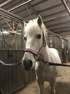 A white pony