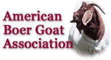 Heart-of-Gold-Farm-Boar-Goats