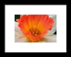 daffodil, orange, flower, bloom, blossom, nature, garden, michiale, schneider, photography