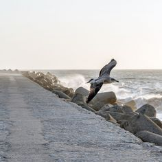 a wingman ... by David Kracht, via Flickr