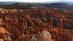 www.beebower.com   Bryce Canyon National Park makes a photographer's dreams come true.   Dad set off in exploring mode since this was his first visit to the park. Like Indiana Jones searching for an ancient treasure, Dad meandered through several trails looking for stellar photographs. He captured a wide-angle sunrise shot of the hoodoos, row after row of incomparable stone creations.  #brycecanyonnationalpark #brycecanyon #utah #hoodoos #landscapephotography