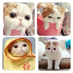 Snoopy cat bath time