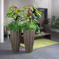 Brown Firewood Displays With Philodendron Red Emerald Plants