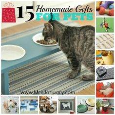 15 Homemade Gift Ideas for Pets