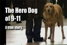 Remarkable video of guide dog who saves his master on 9/11. Watch: http://www.sonnyradio.com/hero-dog-of-911.html