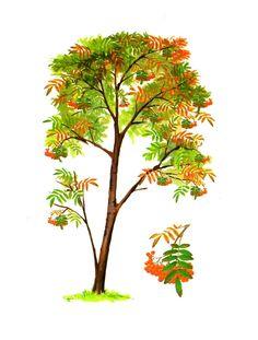 Jarzebina Autumn Activities For Kids, Garden Landscaping, Card Games, Sustainability, Garden Design, Flora, Homeschool, Herbs, Leaves