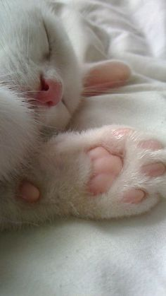 Sleeping pile of white furry love