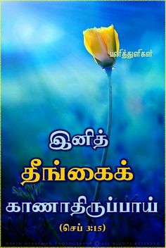 """""""You shalt not see evil any more"""" - (Zephaniah Bible Vasanam In Tamil, Tamil Bible Words, Bible Quotes, Bible Verses, Bible Words Images, Tamil Motivational Quotes, Open Bible, Advanced English Vocabulary, Bible Verse Wallpaper"""
