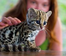 animal, awesome, baby, cool, cute (Full Size)
