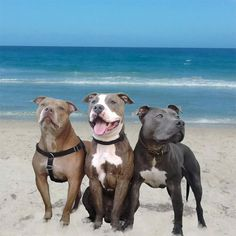 10 Owners Reveal Why They Absolutely Adore Their Pit Bull