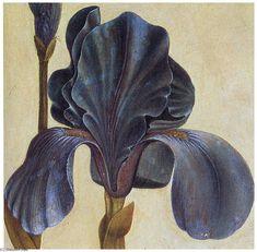 Acheter Tableau 'Troiana Iris (Détail)' de Albrecht Durer - Achat d'une…