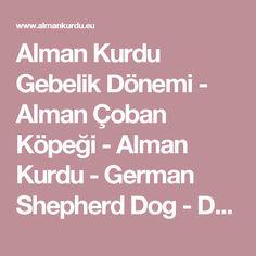 Alman Kurdu Gebelik Dönemi - Alman Çoban Köpeği - Alman Kurdu - German Shepherd Dog - Deutsche Schäferhunde