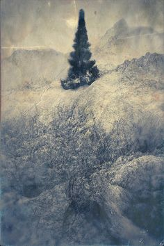 White Trees by Chaotic Atmospheres , via Behance
