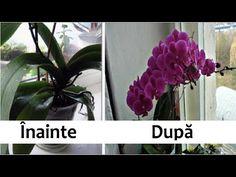 Dried Flowers, Glass Jars, Bouquet, Fii, Garden, Youtube, Flowers, Plant, Dry Flowers