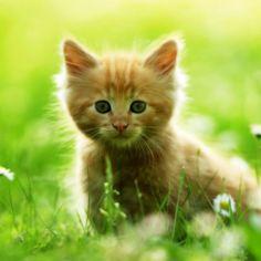 Lief katje tussen de bloemen