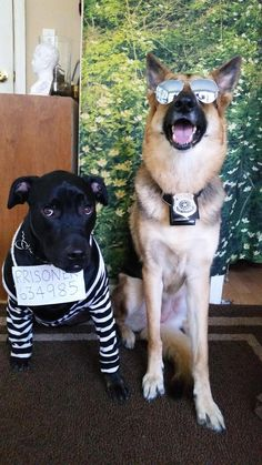 We've gathered the best of the best dog Halloween costumes and cat Halloween costumes to help you celebrate your favorite spooky holiday with your entire family - pets included! Check out our picks of the 40 best Halloween costumes for pets. Best Dog Halloween Costumes, Cute Dog Costumes, Pet Costumes For Dogs, Zombie Costumes, Halloween Couples, Creative Costumes, Family Costumes, Group Costumes, Disney Costumes