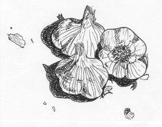 Drawing ideas - garlic