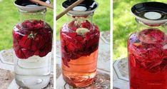 V létě už nepiji nic jiného, než čaj z lístků růže. Elixír na mládí, který prospěje vašemu zdraví, si můžete udělat doma během pár minut. | iRecept.cz