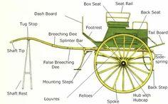 Two-wheeled dog cart.