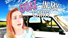STORYTIME: There's A Goat in my Car!?  Newdress Review!