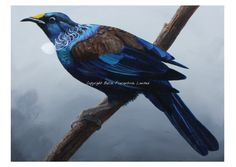 New Zealand Tui, Claire-Erica Sun Art, Morning Sun, Canvas Art, Bird, Gallery, Claire, Animals, Artists, Animales
