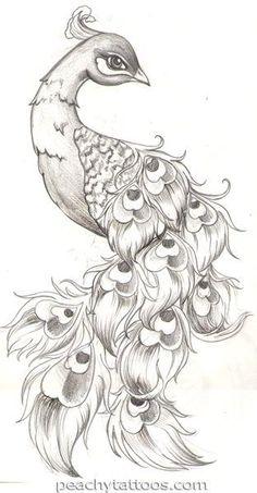 dessin au crayon à papier - oiseau jeune paon