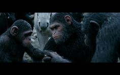 online [[watch]] War for the Planet of the Apes (2017) hd 1080p