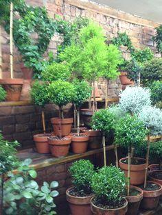 NY Topiary