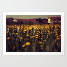 a sea of daisies Art Print by ingz