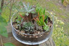 Le vert de la Grande Terrarium succulente par theZenSucculent