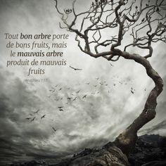 La Bible - Versets illustrées - Matthieu 7:17 - Tout bon arbre porte de bons fruits, mais le mauvais arbre produits de mauvais fruits.