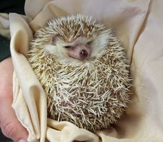 Hedgehog....need I say anymore (: